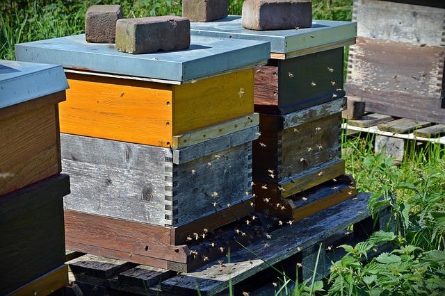 Ruches abeilles
